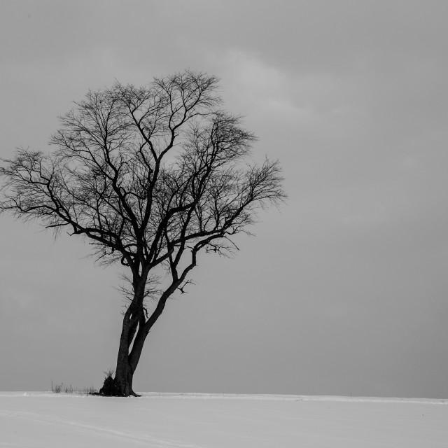 """""""Sigle Tree in Snowy Field B&W"""" stock image"""