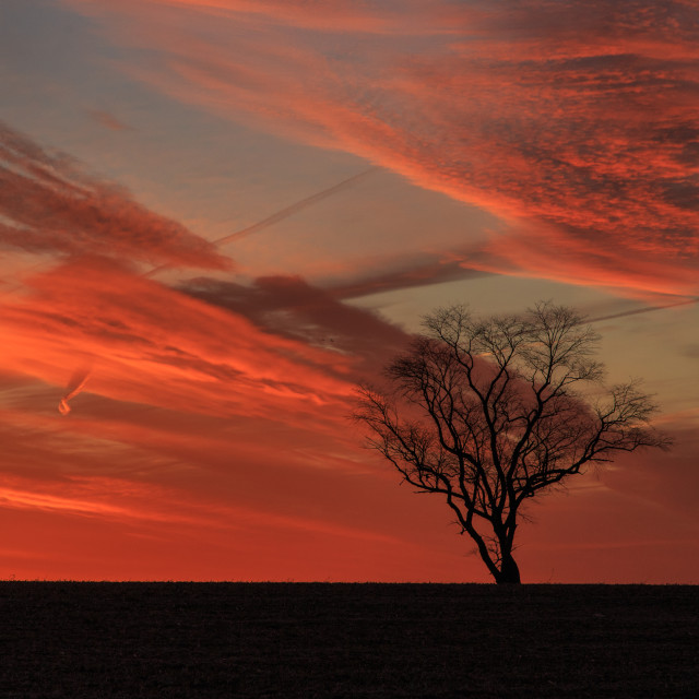 """Single Tree against a Red Sky"" stock image"