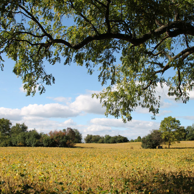 """September Soybean Field"" stock image"