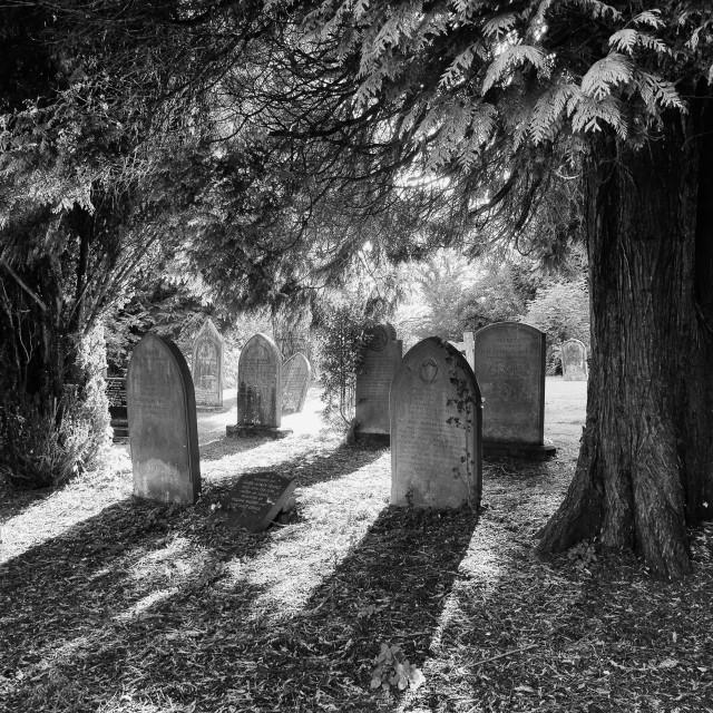 """Grave Yard in the Winter sun"" stock image"
