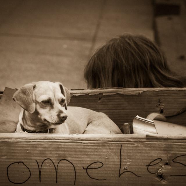 """""""Homeless Man and Dog"""" stock image"""