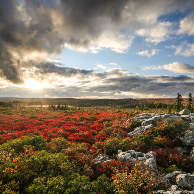 """Dolly Sods, Autumn Sunset"" stock image"
