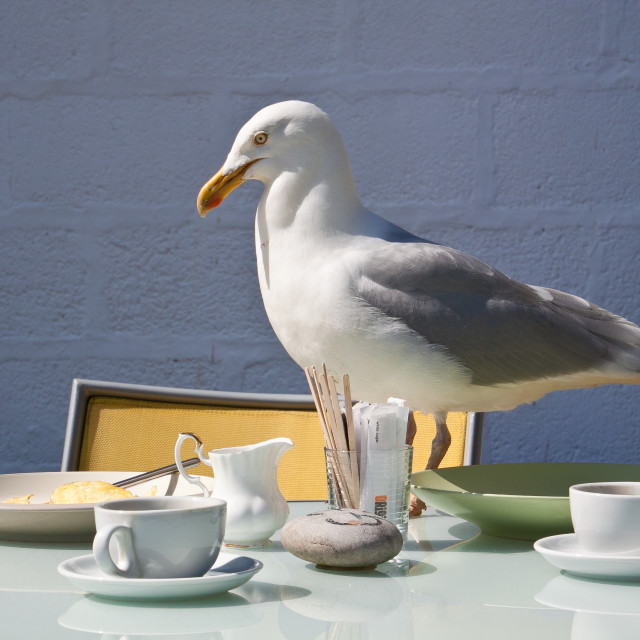 """A seagull called Cedrick"" stock image"