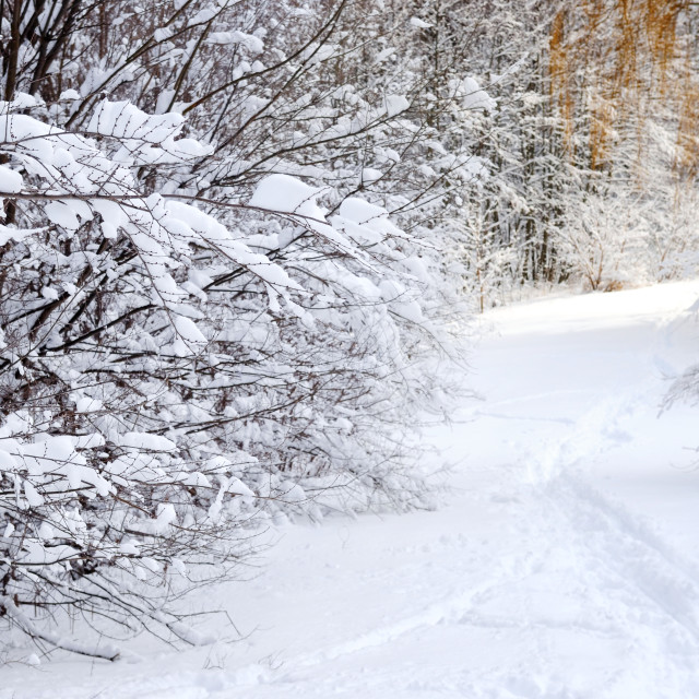 """Path in winter forest"" stock image"