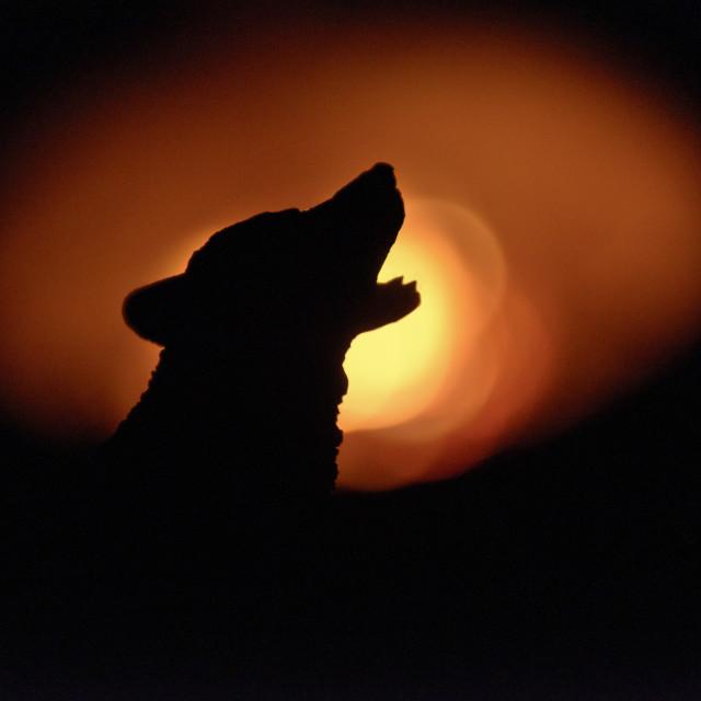 """Howl"" stock image"