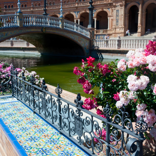 """Spanish roses"" stock image"