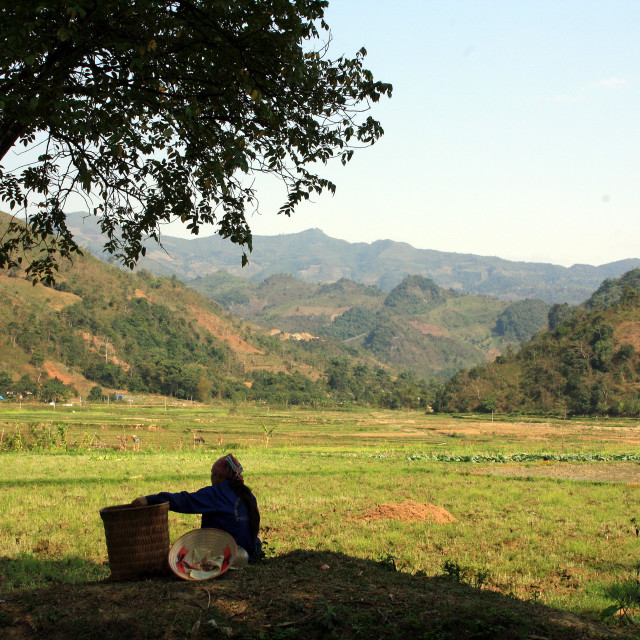 """Vietnamese field worker resting"" stock image"