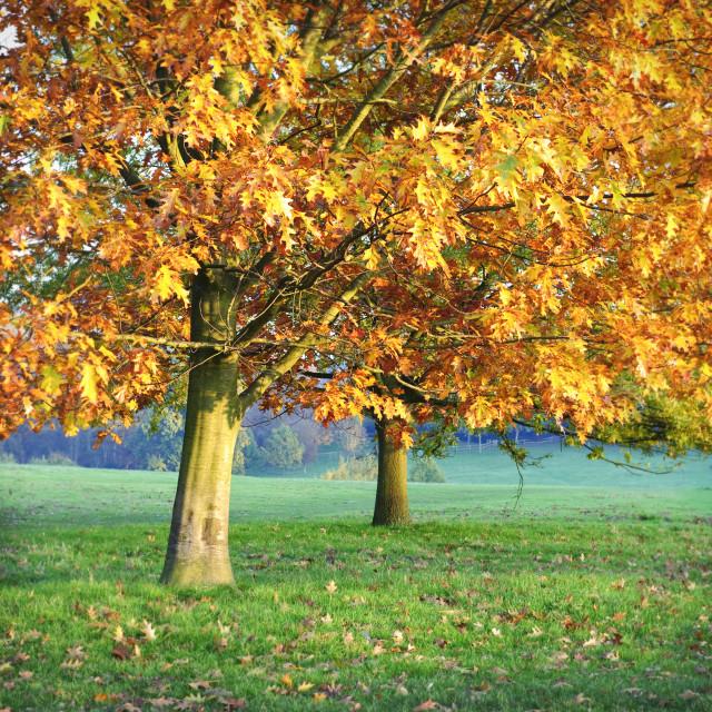 """Autumn days"" stock image"