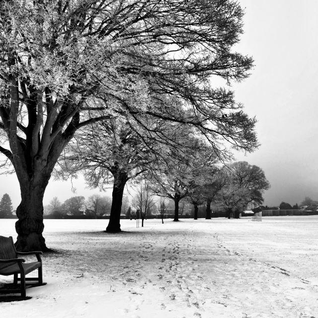 """Winter in Monochrome"" stock image"