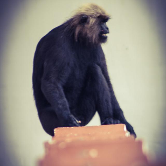 """""""Monkey business"""" stock image"""