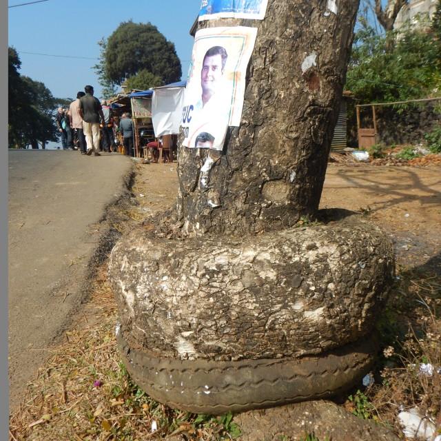 """Tyre round tree"" stock image"