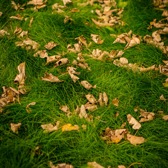 """Leaves on the ground"" stock image"