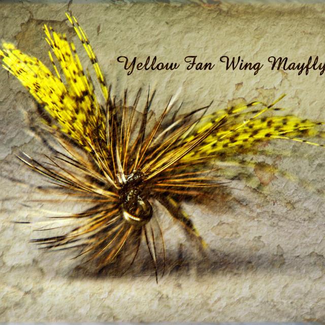 """Yellow Fan Wing Mayfly"" stock image"