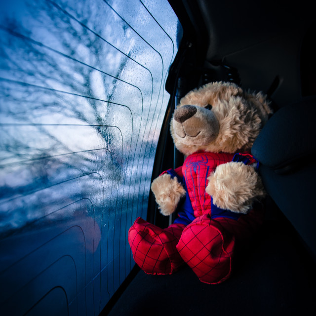 """Teddy Bear in back of car"" stock image"
