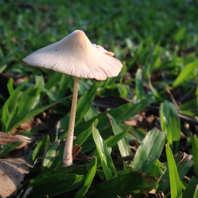 """Mushrooms after the rain"" stock image"
