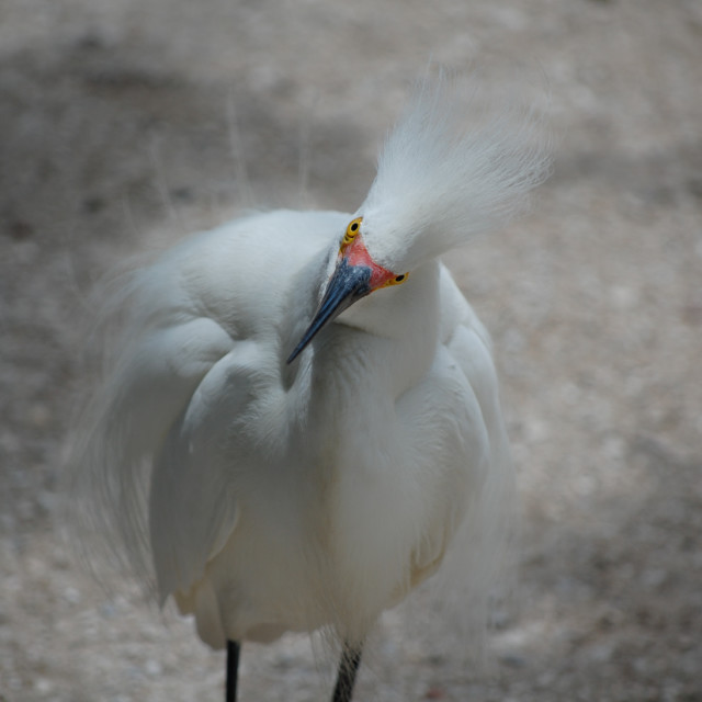 """Funny Bird Look"" stock image"