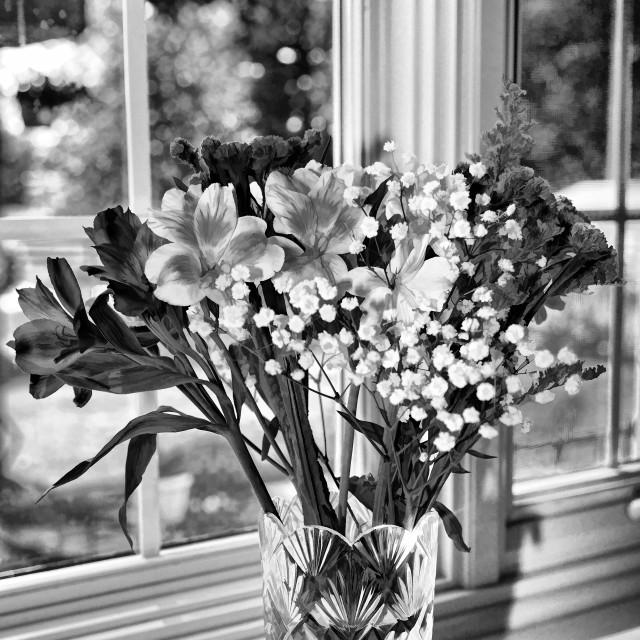 """""""BW Vase of Flowers"""" stock image"""