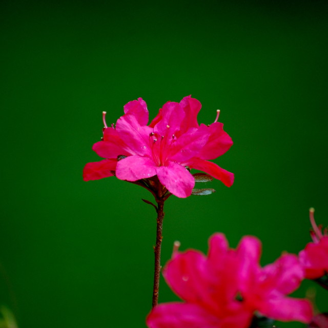 """Pink on Green"" stock image"