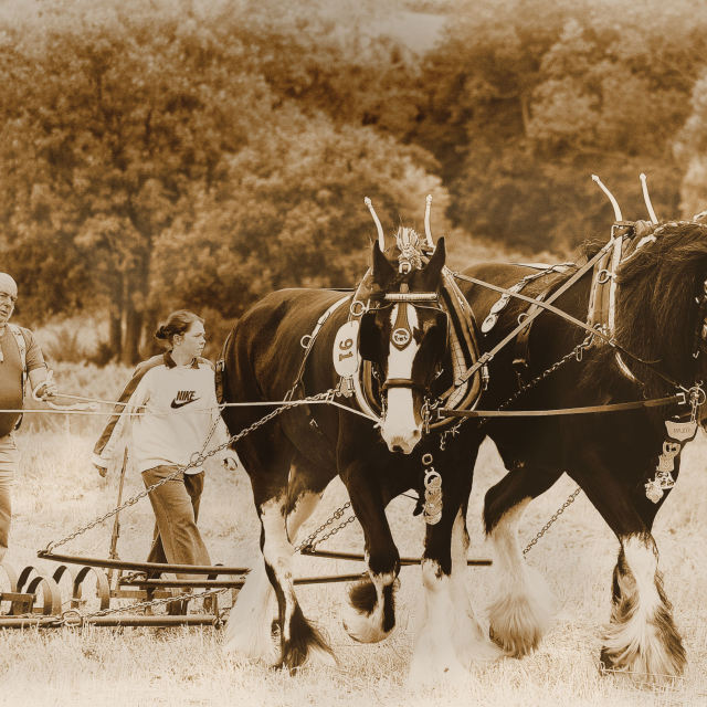 """OLD FASHION PLOUGHING"" stock image"