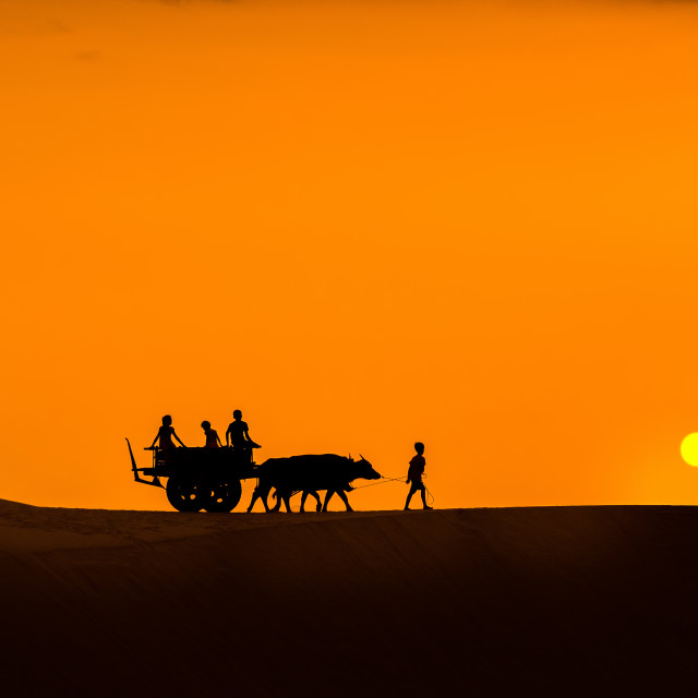 """Silhouette of oxcart and people on sand hill - Vietnam landscape"" stock image"