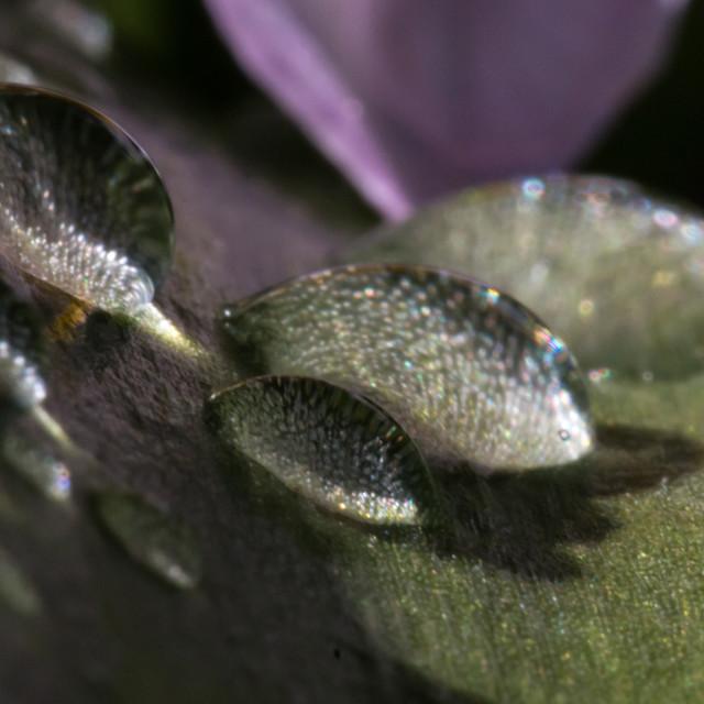 """""""Droplet on flower leaf"""" stock image"""