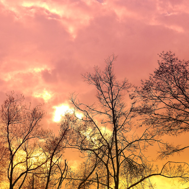 """""""Fantastic Dramatic Pink and Gold Sky"""" stock image"""