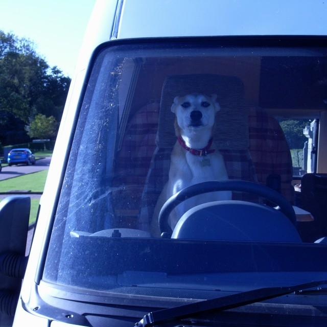 """dog driver"" stock image"