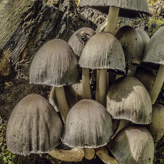 """fungi"" stock image"