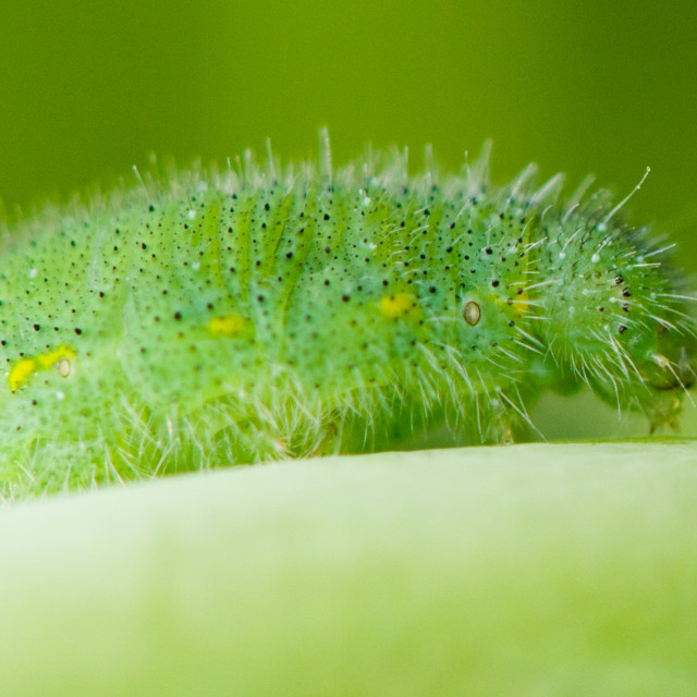 """Caterpillar"" stock image"