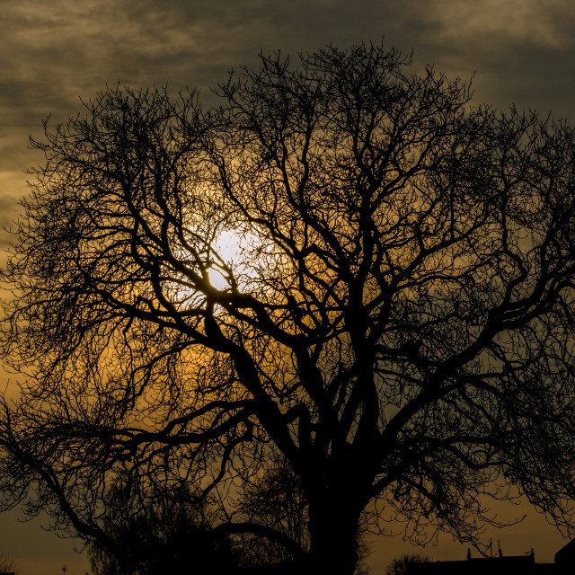 """Sunset Tree"" stock image"
