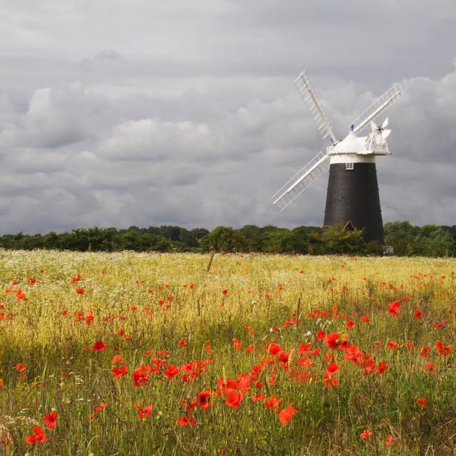 """Poppy Mill"" stock image"