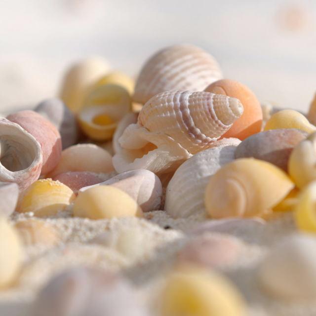 """seachells"" stock image"