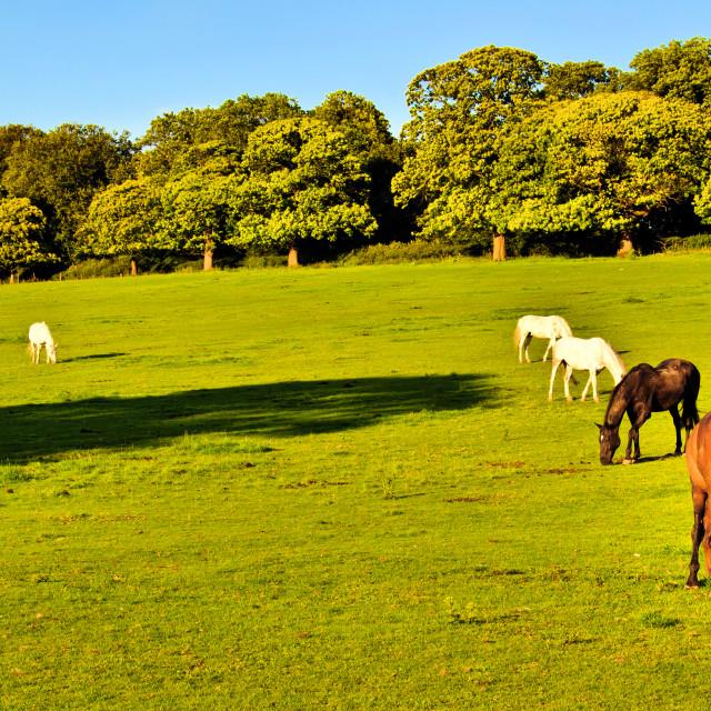 """""""UK Rural Scene"""" stock image"""