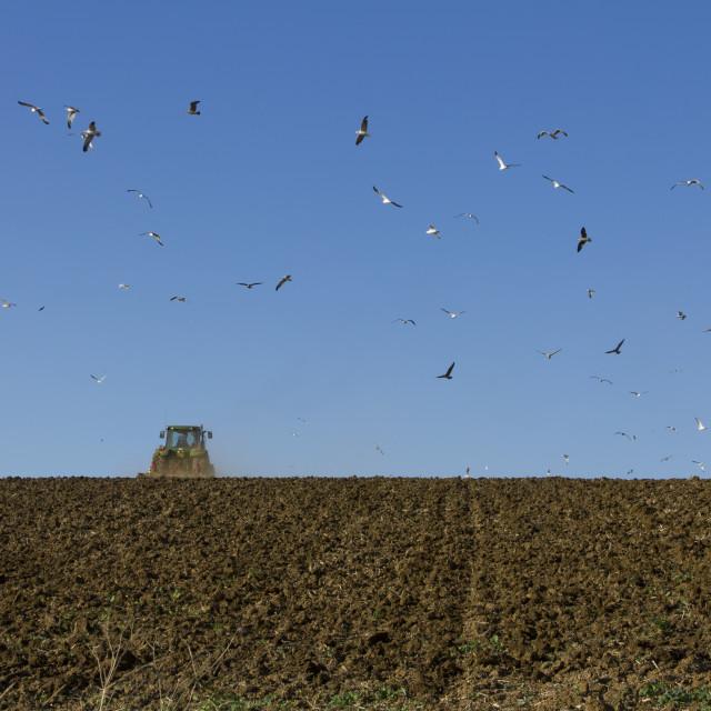 """Autumn ploughing"" stock image"