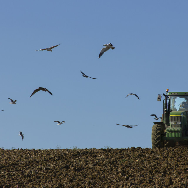 """""""Ploughing the field"""" stock image"""