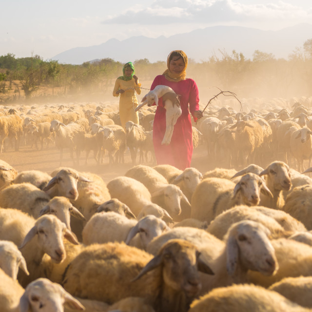"""sheep tender women"" stock image"