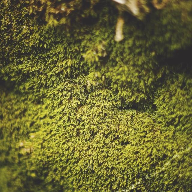 """""""moss macro 1"""" stock image"""