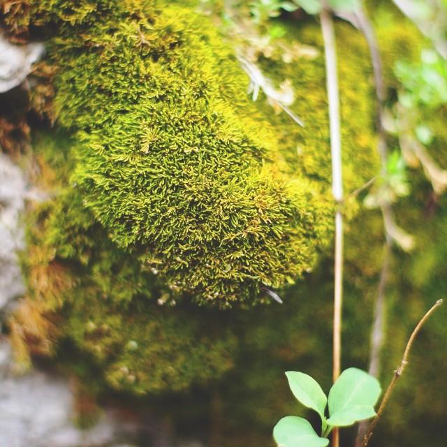 """""""moss macro 2"""" stock image"""