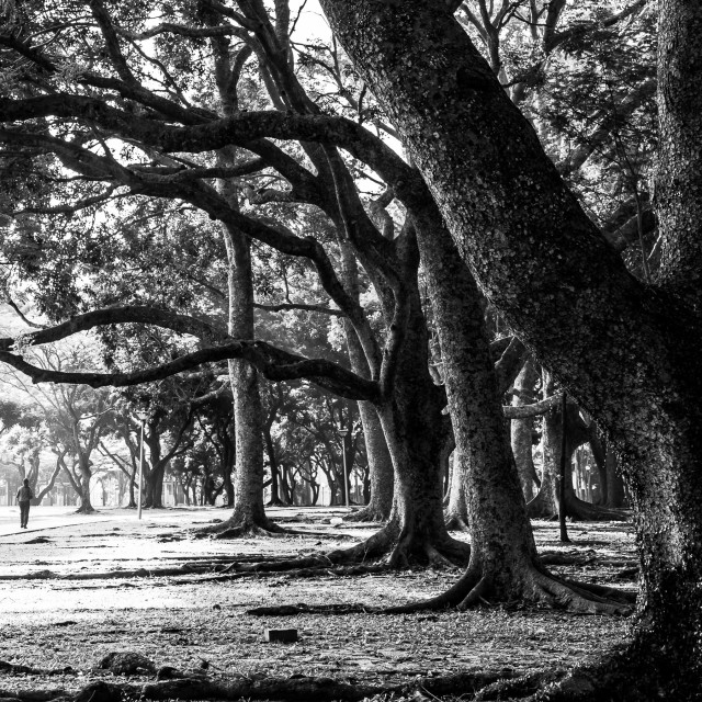 """""""Walking under the Trees"""" stock image"""