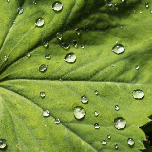 """Water Drops"" stock image"