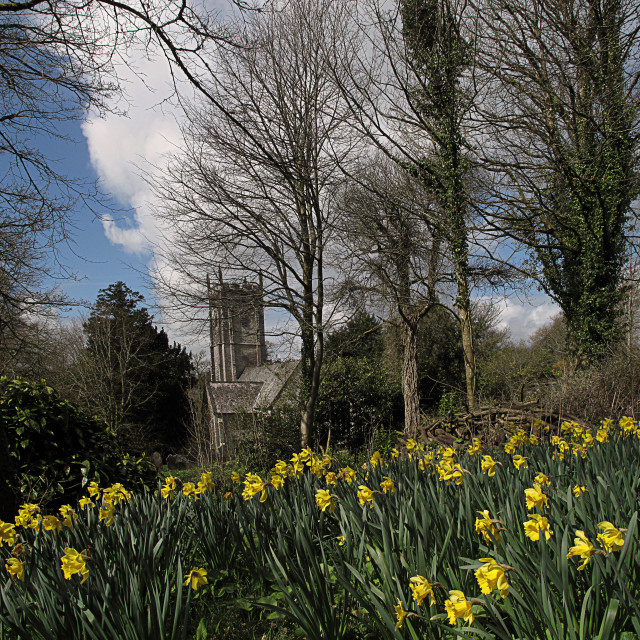 """""""English Church and daffodil flowers"""" stock image"""