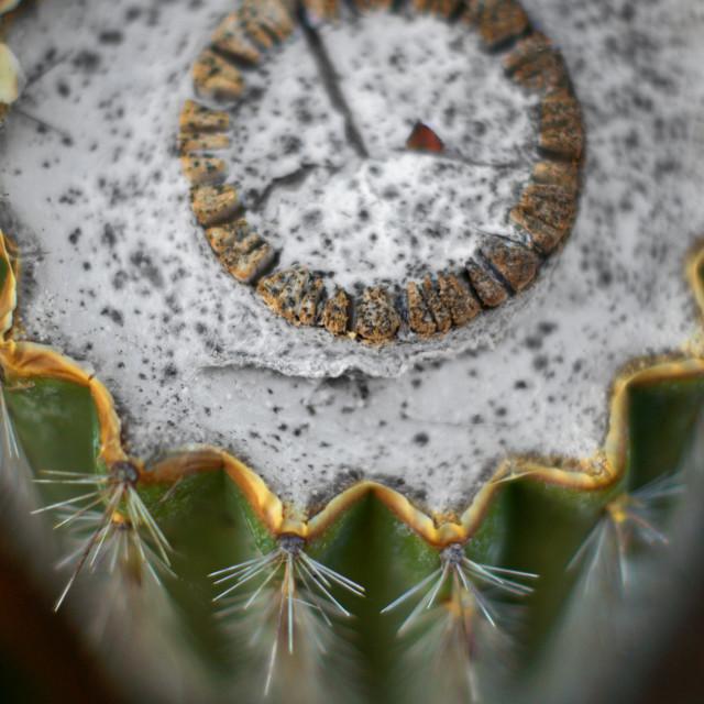 """Cactus Timepiece"" stock image"