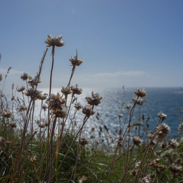 """Wild flowers at the beach"" stock image"