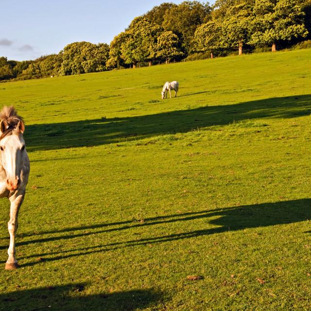 """Friendly Horses"" stock image"
