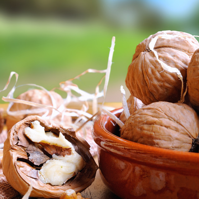 """""""Group of walnuts on a table in the field vertical composition"""" stock image"""