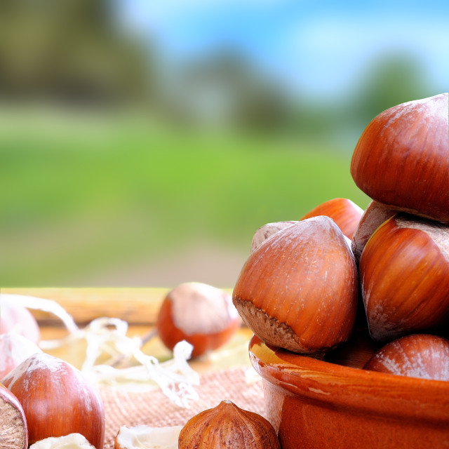 """""""Group of hazelnuts on a wooden table in field vertical composit"""" stock image"""