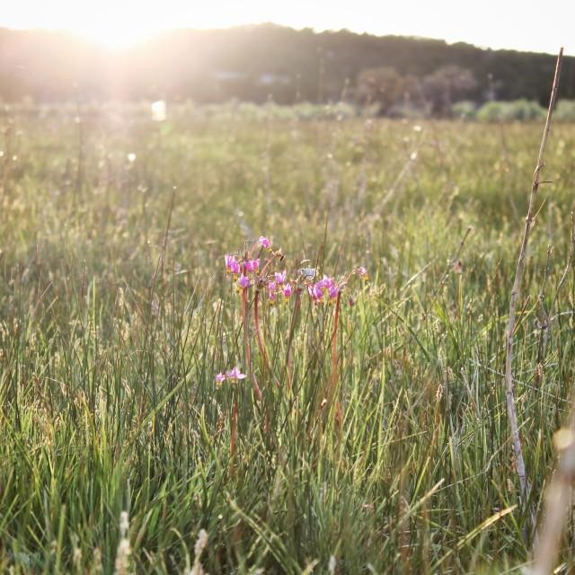 """Last spring flower"" stock image"