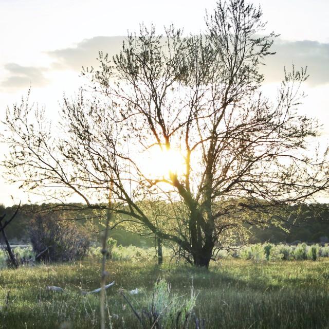 """""""Family tree"""" stock image"""