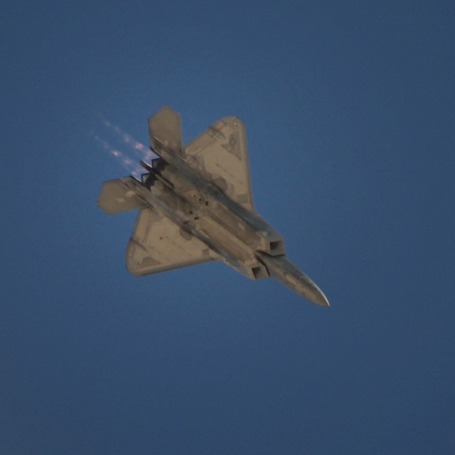 """Flying raptor"" stock image"