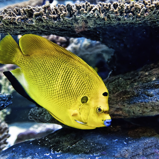 """WCC_8424- Yellow Fish"" stock image"